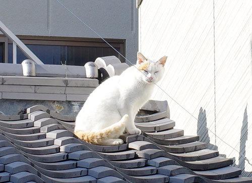 20201223cats.jpg