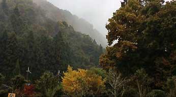 20081116hoyo_2