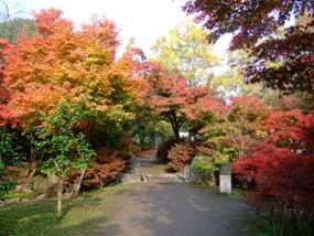 20081117umekoji_koyo