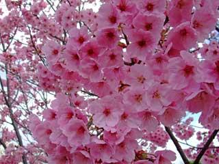 20090323yoko_umekoji