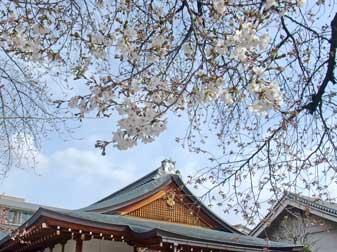 20090326toji_sakura
