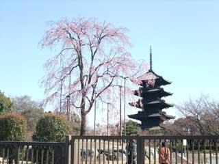 20090331sidares_toji