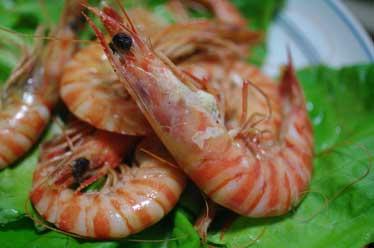 20111218shrimp