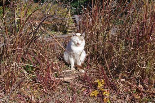 20120107cat