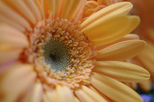20120302flower