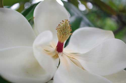 20120627bigflower