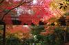 20131126umekoji_koyo